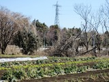 (2)雉の生息地