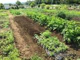 (2)畝作り