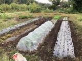 (4) 玉葱の畝つくり