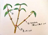 剪定方法-2