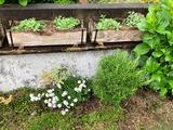 (8) お庭