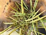 (4)のらぼう菜の種