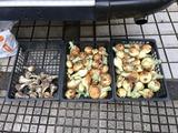 ニンニクと玉葱の収穫