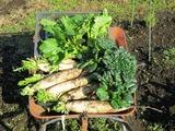 (1)朝どり野菜