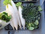 大根ターツァイチンゲン菜