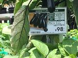 (1)千両2号