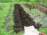 発酵牛糞堆肥の鋤き込み