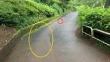 (4) スリップ痕とライト発見場所