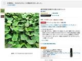 (3)amazonの安納芋苗