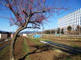 富士通 2014_03_11