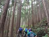 (3)樹林帯