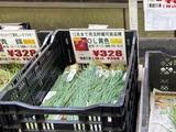 (12) 玉葱苗