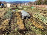 (1) 馬糞堆肥