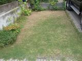 芝生の異変