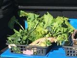 (2)冬野菜