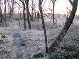 (3)散歩路