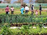 (6)野菜の収穫