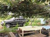 (2)キウイ棚の休憩所