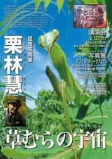 20100227草むらの宇宙