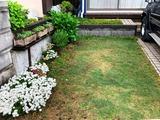 (7) お庭
