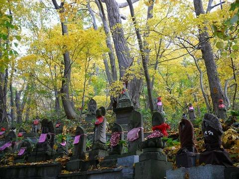 札幌円山の紅葉