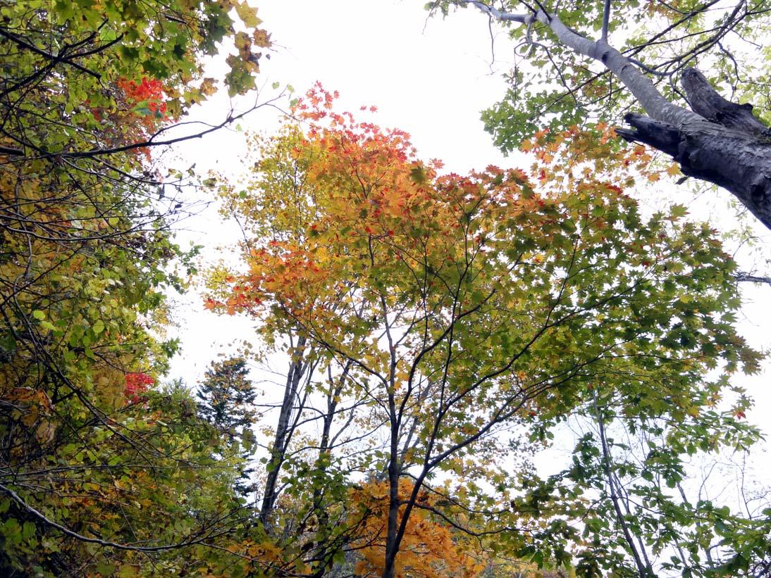 定山渓の紅葉2