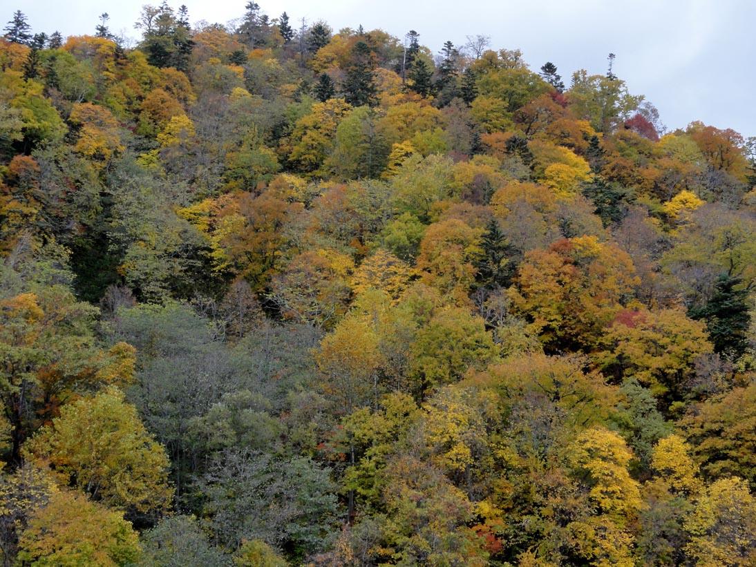 定山渓の紅葉4