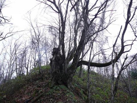 札幌近郊の藤野の山に行ってきました。