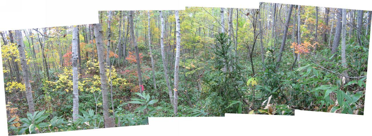 見通しの悪い森林の地すべりでもうまくいきました。