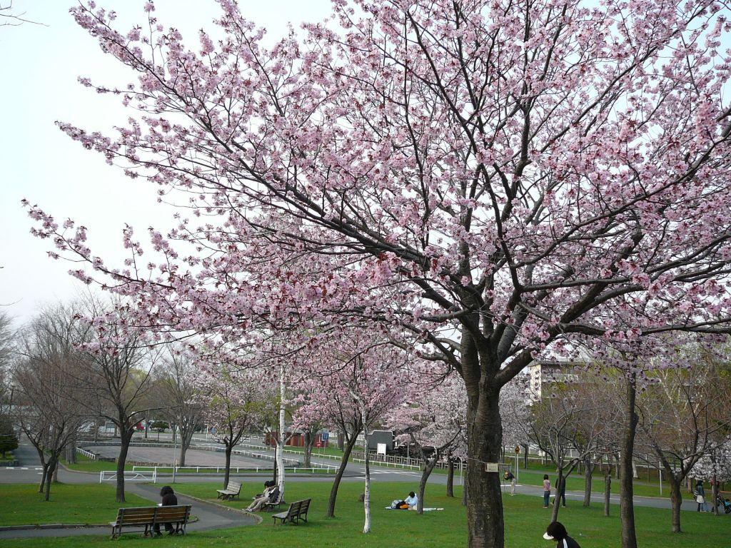 桜-ゴールデンウィークは天候にめぐまれて