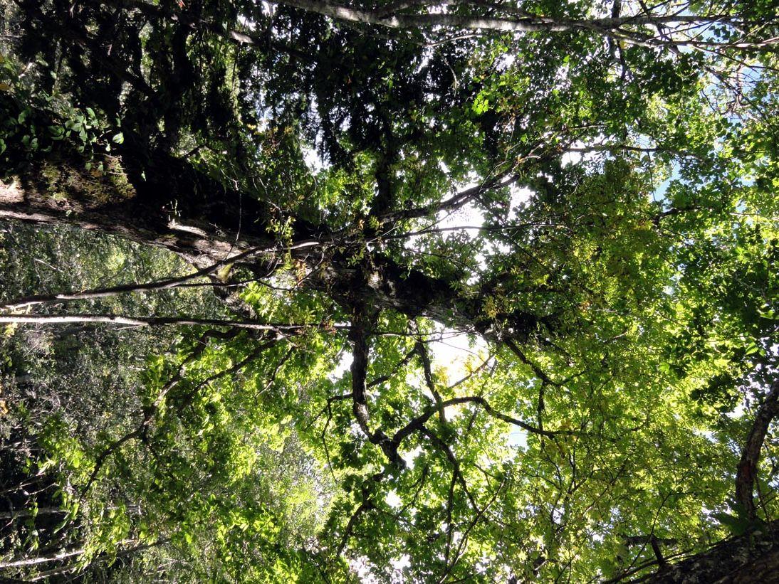 10月はじめの定山渓の山の木