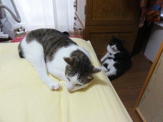 2匹の猫が居ます