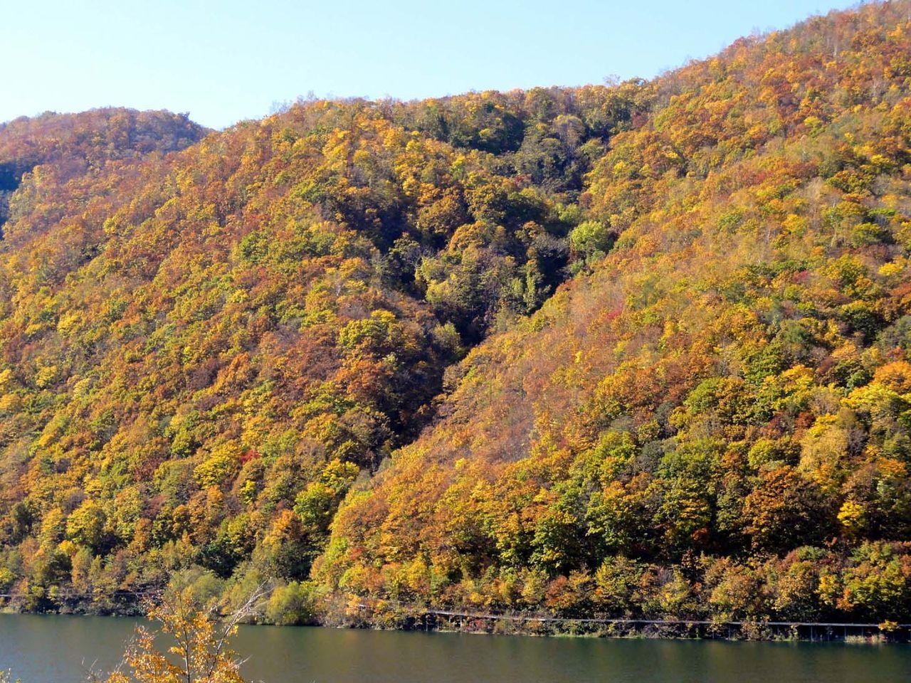 朝里から定山渓、道々1号線の紅葉