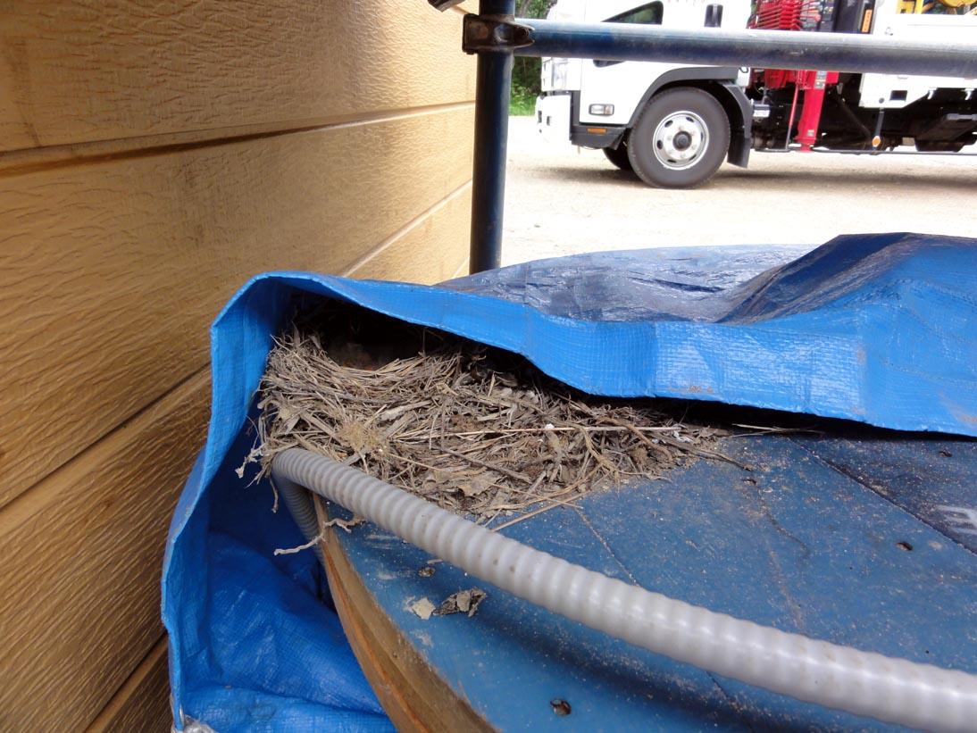 現場にキセキレイの巣