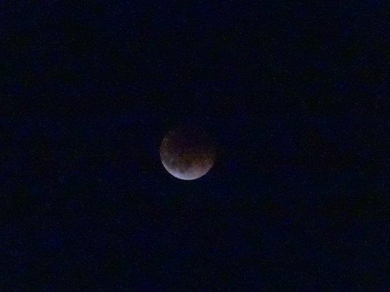 月食を撮ってみた
