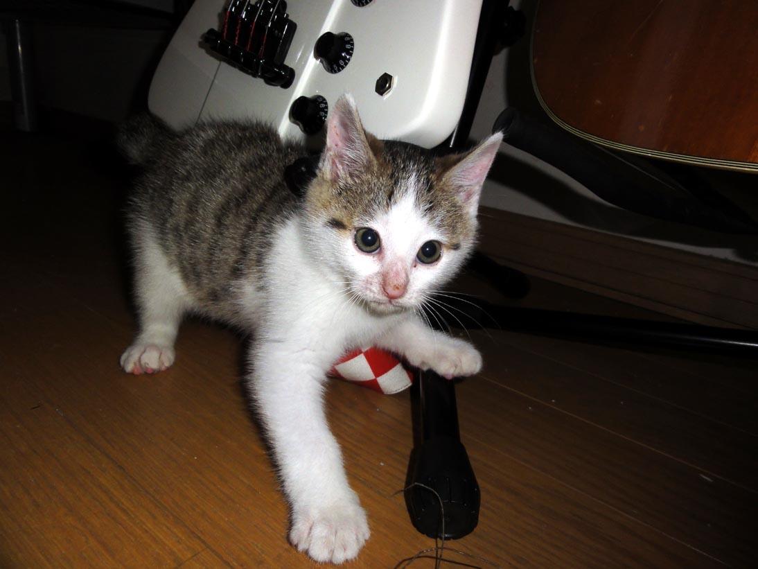 我が家に子猫が来ました