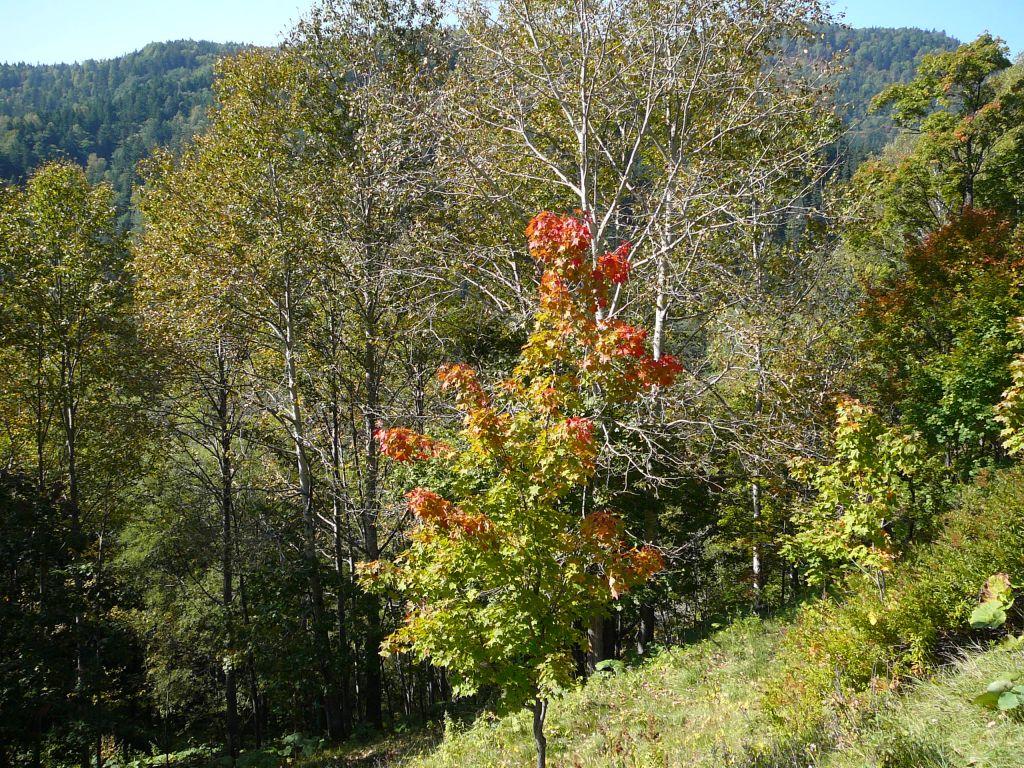 大雪ダムあたりはぼちぼちと紅葉がはじまりました
