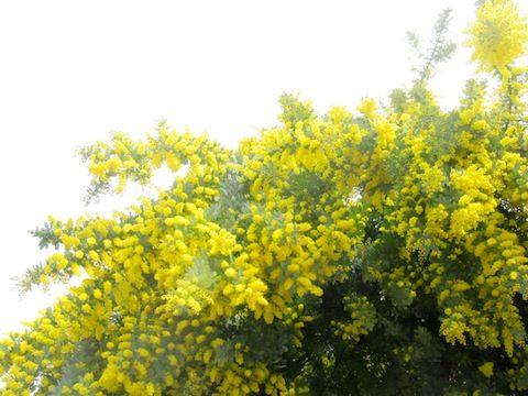 花いっぱい