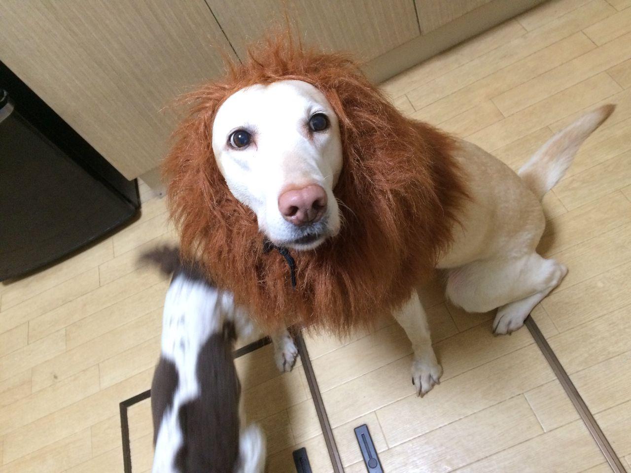 ライオンそらちゃん