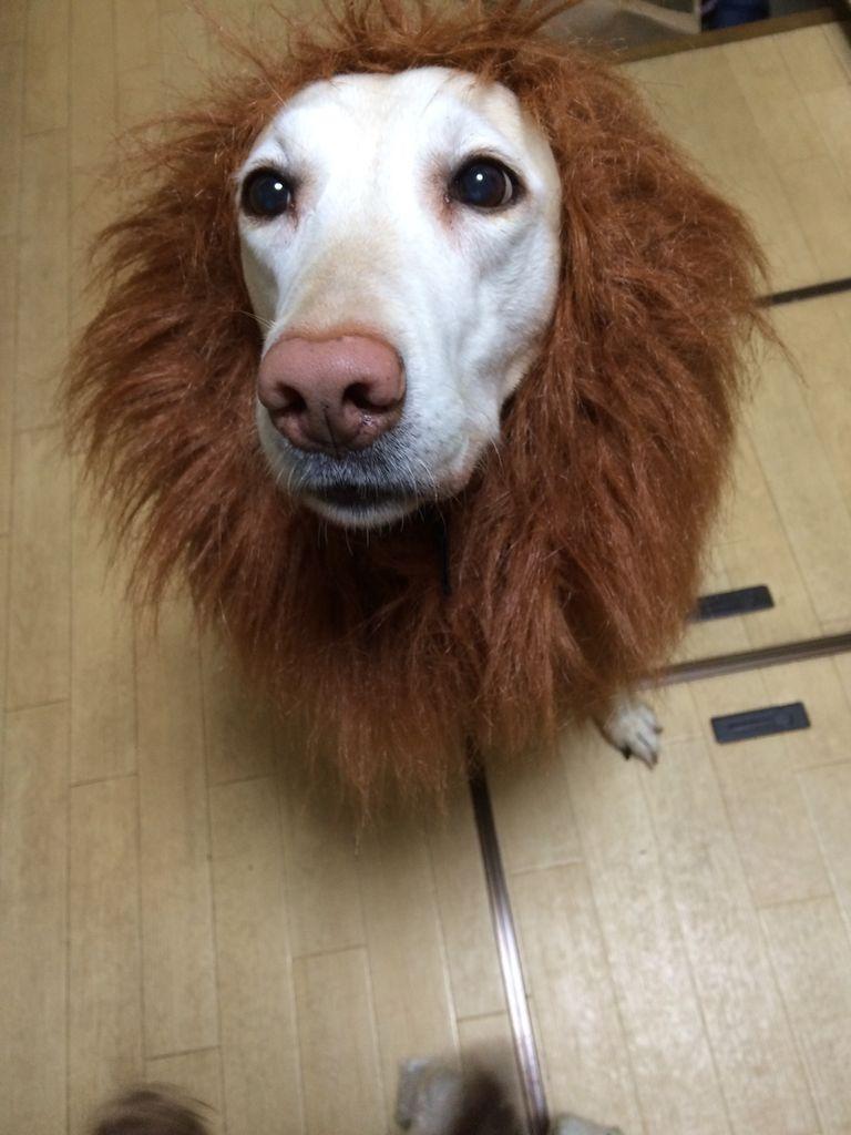 ライオンそらちゃん3