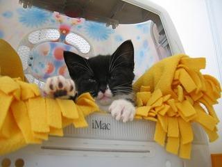 iMac猫ハウス