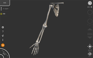 アーティストのための3D解剖学的構造_2
