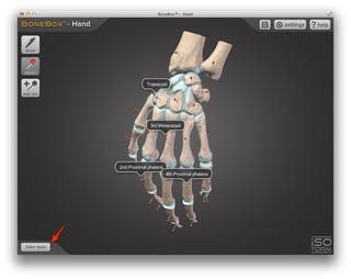 BoneBox-Hand-Quiz-img1