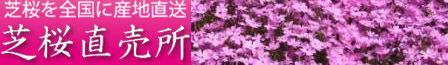 芝桜バナー