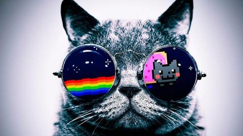 1366x768_cool-cat