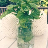 basil-party
