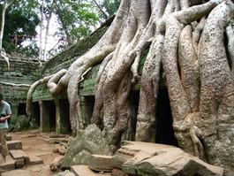 カンボジア 191