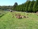 Free Range Eggs Farm150-1