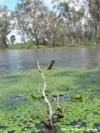 wetland100-2