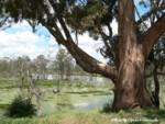 wetland150-1